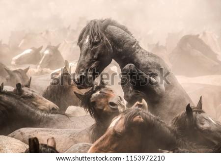 herd of wild horses #1153972210