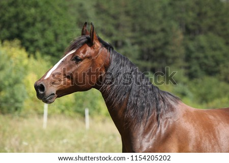 Amazing horse with nice mane on pasturage in summer #1154205202