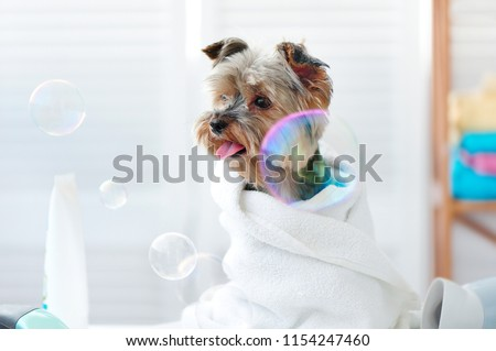 Yorkie puppy surrounded by soap bubbles #1154247460