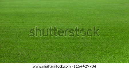 Green grass field, green lawn, Artificial grass. Green grass for golf course, soccer, football, sport. Green turf grass texture and background for design with copy space for text or image. #1154429734