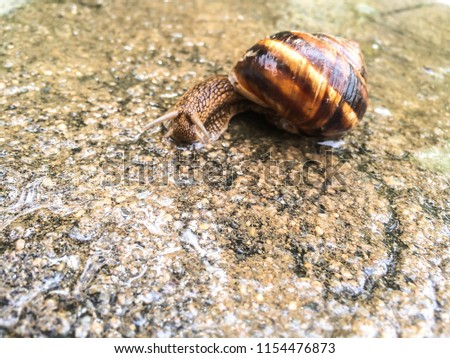 snail large shellfish for dizayna background wallpaper  #1154476873