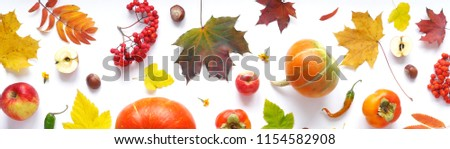 Banner of autumn yellow, orange and red maple leaves, vegetables and fruits isolated on white background, top view, flat layout. Creative pattern, autumn background. Pumpkins on a white background. Royalty-Free Stock Photo #1154582908