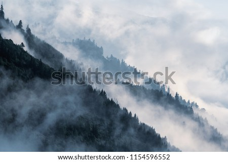 Forested mountain slope in low lying valley fog with silhouettes of evergreen conifers shrouded in mist. #1154596552