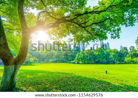 Grass and green woods in the park #1154629576