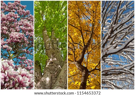 Four seasons as a collage Royalty-Free Stock Photo #1154653372