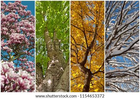 Four seasons as a collage #1154653372