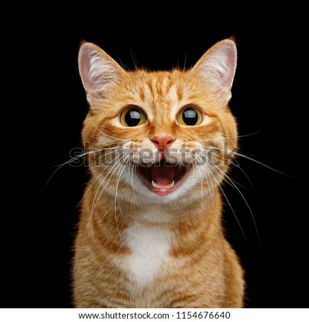 Funny Portrait of Happy Smiling Ginger Cat Gazing with opened Mouth and big eyes on Isolated Black Background #1154676640
