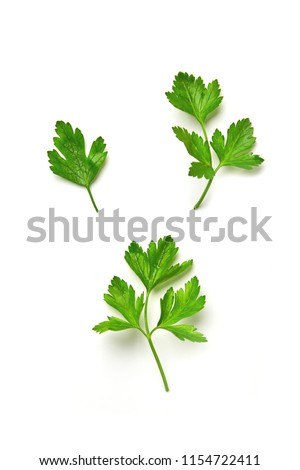 Parsley isolated. Parsley on a white background. Juicy natural parsley leaves #1154722411