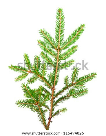 green banch of fir isolated on white #115494826