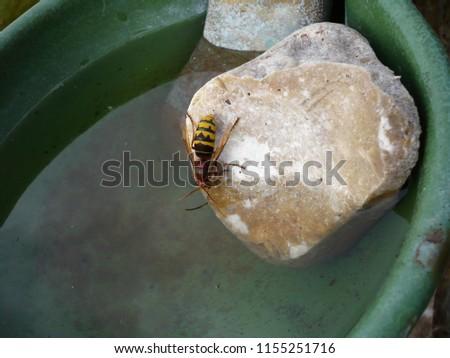 a hornet seeks water  #1155251716
