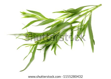Tarragon leaves ( Artemisia dracunculus ) isolated on white background #1155280432