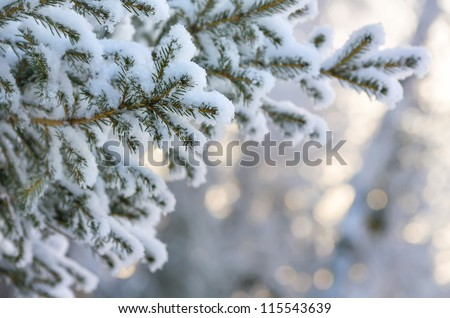 Snow-covered tree branch at sunset Royalty-Free Stock Photo #115543639