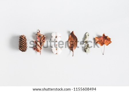 Autumn composition. Pattern made of eucalyptus branches, cotton flowers, dried leaves on pastel gray background. Autumn, fall concept. Flat lay, top view #1155608494