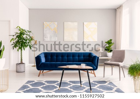Real photo of plants, dark blue sofa and posters on the wall in a modern living room interior #1155927502
