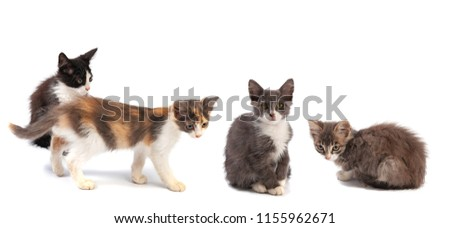 Four little kittens on a white background #1155962671