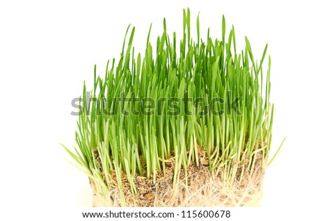Green grass showing roots #115600678