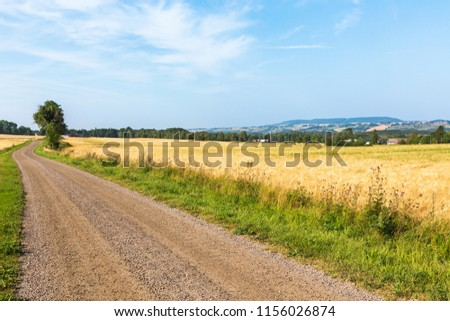 Gravel road on the side of a cornfield #1156026874