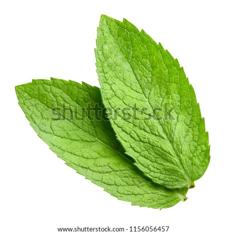 mint leaves isolated on white Clipping Path #1156056457