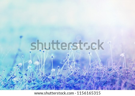 Small grass flowers focus selected background. #1156165315