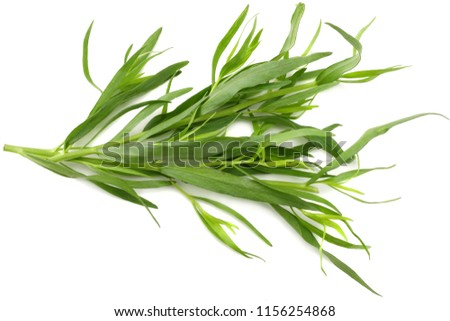 Tarragon leaves ( Artemisia dracunculus ) isolated on white background #1156254868