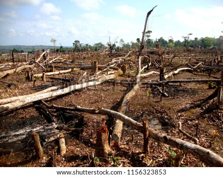 Area of illegal deforestation of vegetation native to the Brazilian Amazon forest #1156323853