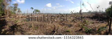 Area of illegal deforestation of vegetation native to the Brazilian Amazon forest Royalty-Free Stock Photo #1156323865