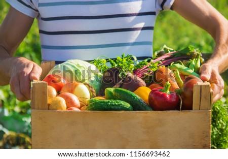 homemade vegetables in the hands of men. harvest. selective focus. summer. #1156693462