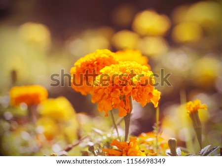 the flowerbed blossoms in a bright sunny day #1156698349