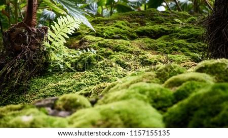 Beautiful green moss on the  floor, moss closeup, macro. Beautiful background of moss for wallpaper. #1157155135