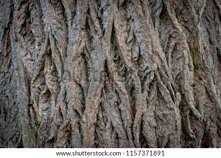 Close Up cracked thick tree bark in the forest, Detail of tree trunk texture,  Nature pattern background. #1157371891