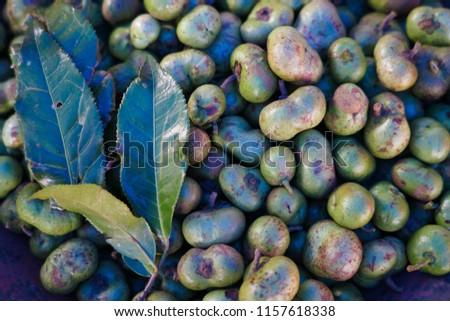 Fruit of tea tree at Ban Huay Nam Kiew. Chieng Rai. Thailand. #1157618338