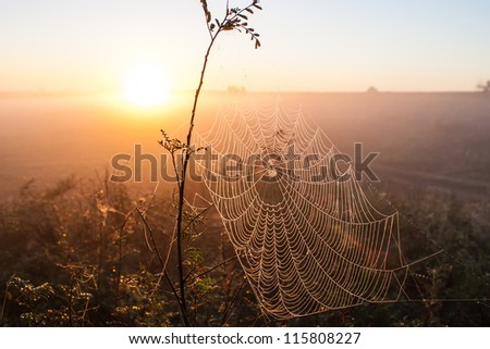 Web of a spider against sunrise in the field covered fogs Royalty-Free Stock Photo #115808227