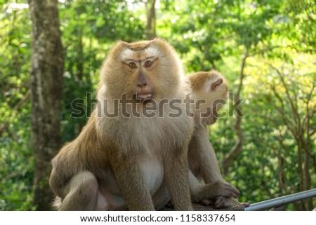 Monkey wildlife with blur background #1158337654