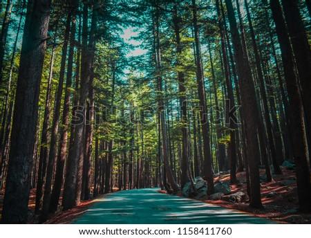 Road between the woods in Kalam, Pakistan #1158411760