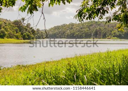 natural landscape of the metropolitan park of Salvador, Bahia, Brazil. #1158446641