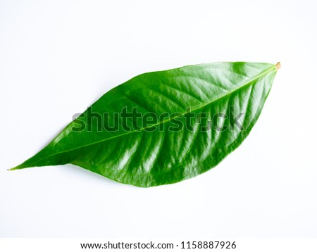 Green leaf on white background and clipping path #1158887926