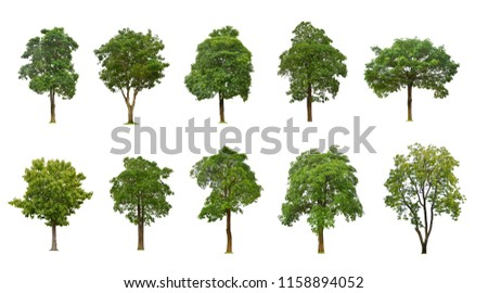 Collection of large and tall green tree isolated on white background, set of ten old trees #1158894052