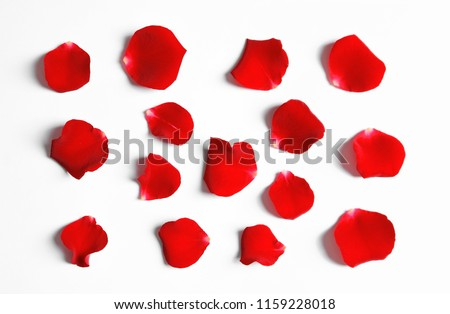 Red rose petals on white background, top view Royalty-Free Stock Photo #1159228018