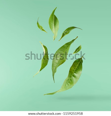 flying green tea leaves isolated on turquoise background. Food levitation concept, high resolution #1159251958