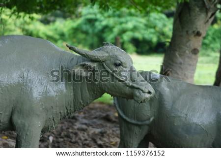 Wildlife Buffalo muddy body #1159376152