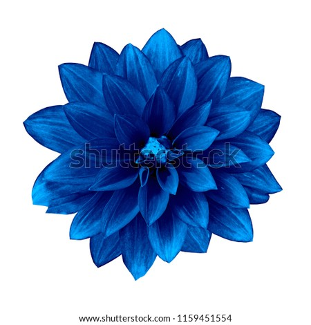 flower ultramarine dahlia isolated on white background. Close-up. Element of design. #1159451554