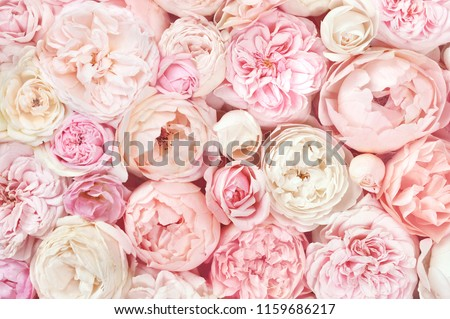 Summer blossoming delicate roses on blooming flowers festive background, pastel and soft bouquet floral card #1159686217