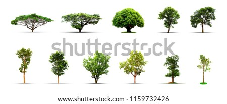 Collection of isolated Trees on white background, A beautiful,Suitable for use in architectural design,Decoration work,Used with natural articles both on print and website. #1159732426