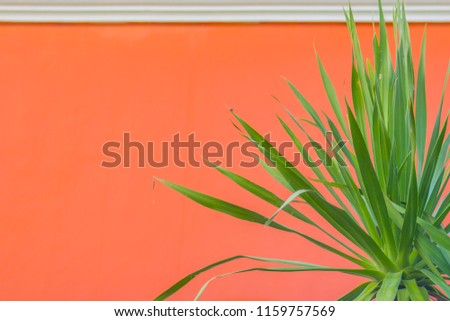 Orange wall with green leaves background. Green leaf on the orange cement wall with copy space for text. #1159757569