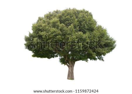Isolated tree on white background #1159872424