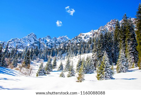Winter snow mountain forest landscape. Winter snow fir trees in winter snow mountains. Winter snow mountain forest fir trees view #1160088088