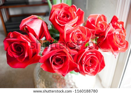 a bunch of red roses close up isolated  #1160188780