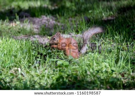 squirrel in Forest #1160198587