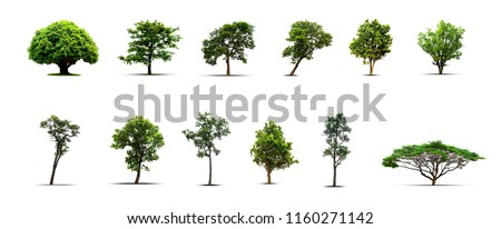 Collection of isolated Trees on white background, A beautiful,Suitable for use in architectural design,Decoration work,Used with natural articles both on print and website. #1160271142