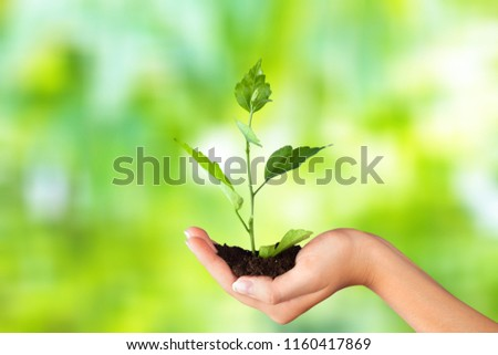 Green Growing Plant in Human Hand on beautiful natural background #1160417869